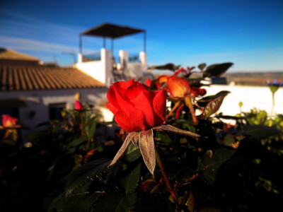 A red flower on the terrace of Casa Campana